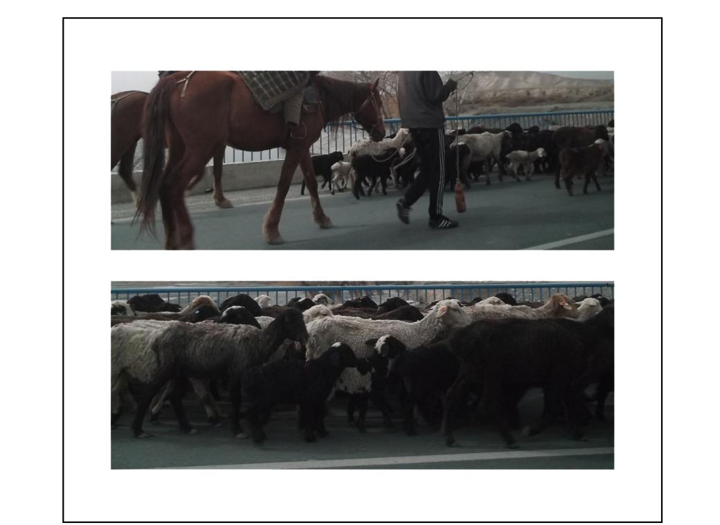 kyrgyzstan.11.rhea.